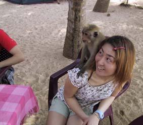 ミリッサにいたリリという猿。人懐っこいけどばかな猿。