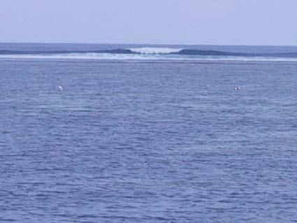 ヌサドゥア。こうみるといいが、波が開いててたるいかダンパー。