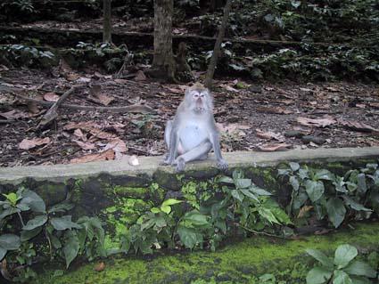 サル。かわいいけどイカツイ。