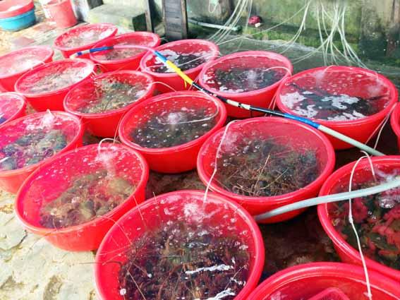 vietnam2013_seafoods