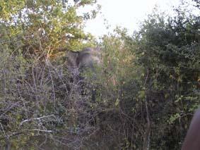 象。見えるかな?こんな近くで檻に入ってないのは初めて。全然可愛くなく恐い。